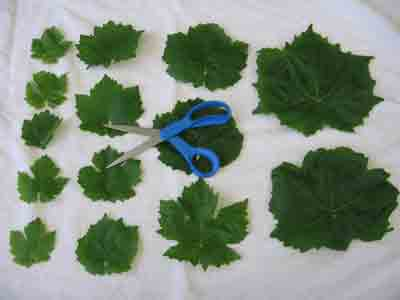 abelofylla yia ntolmades grape leaves for dolmades arranged by size