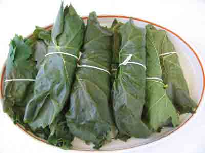 abelofylla yia ntolmades grape leaves for dolmades blanched bundles