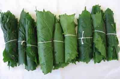 abelofylla yia ntolmades grape leaves for dolmades bundled up in rolls
