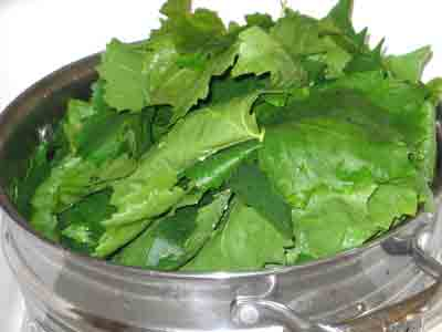 abelofylla yia ntolmades grape leaves for dolmades draining