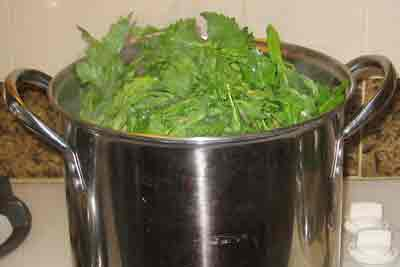 Putting mustard greens into the pot for greek recipe vrouves.